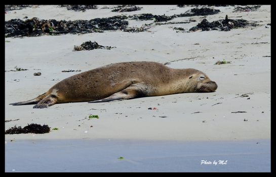 seal enjoying the sun.. zz