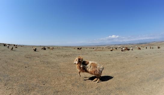 Altay, Xinjiang