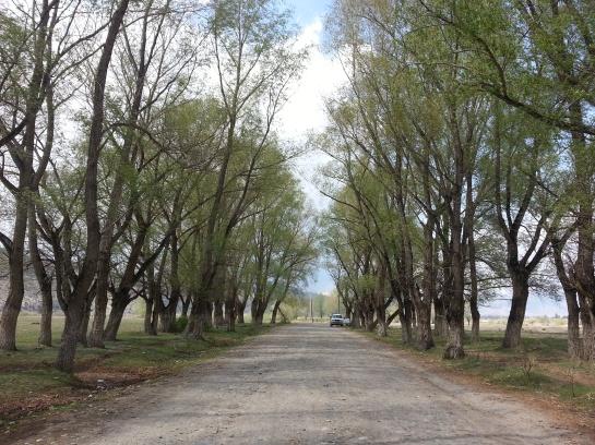 Birding trail in Burqin