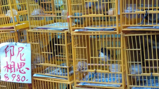 Birds big and small get the same small cage