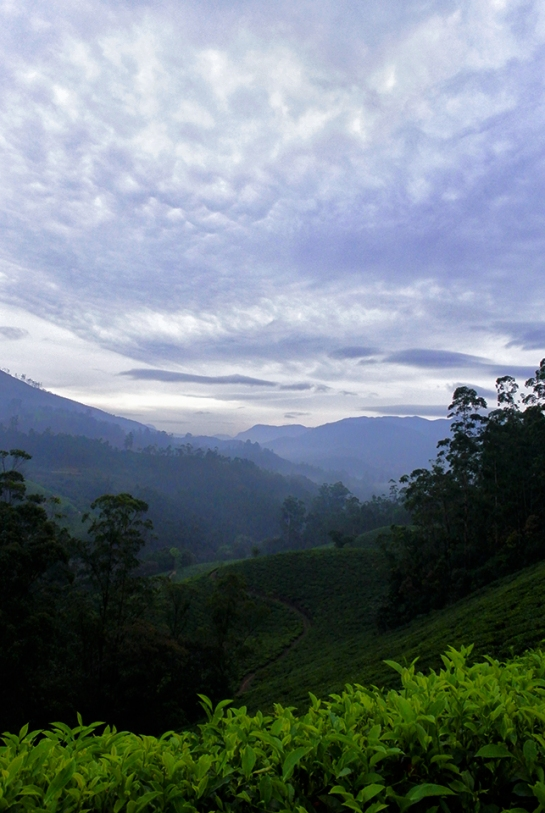 Awesome landscape in Munnar