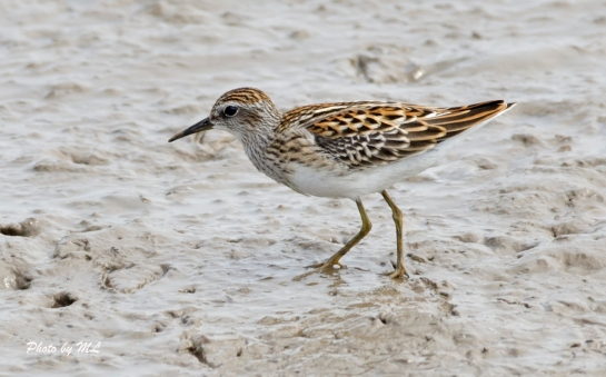 lots of stints at nanpu